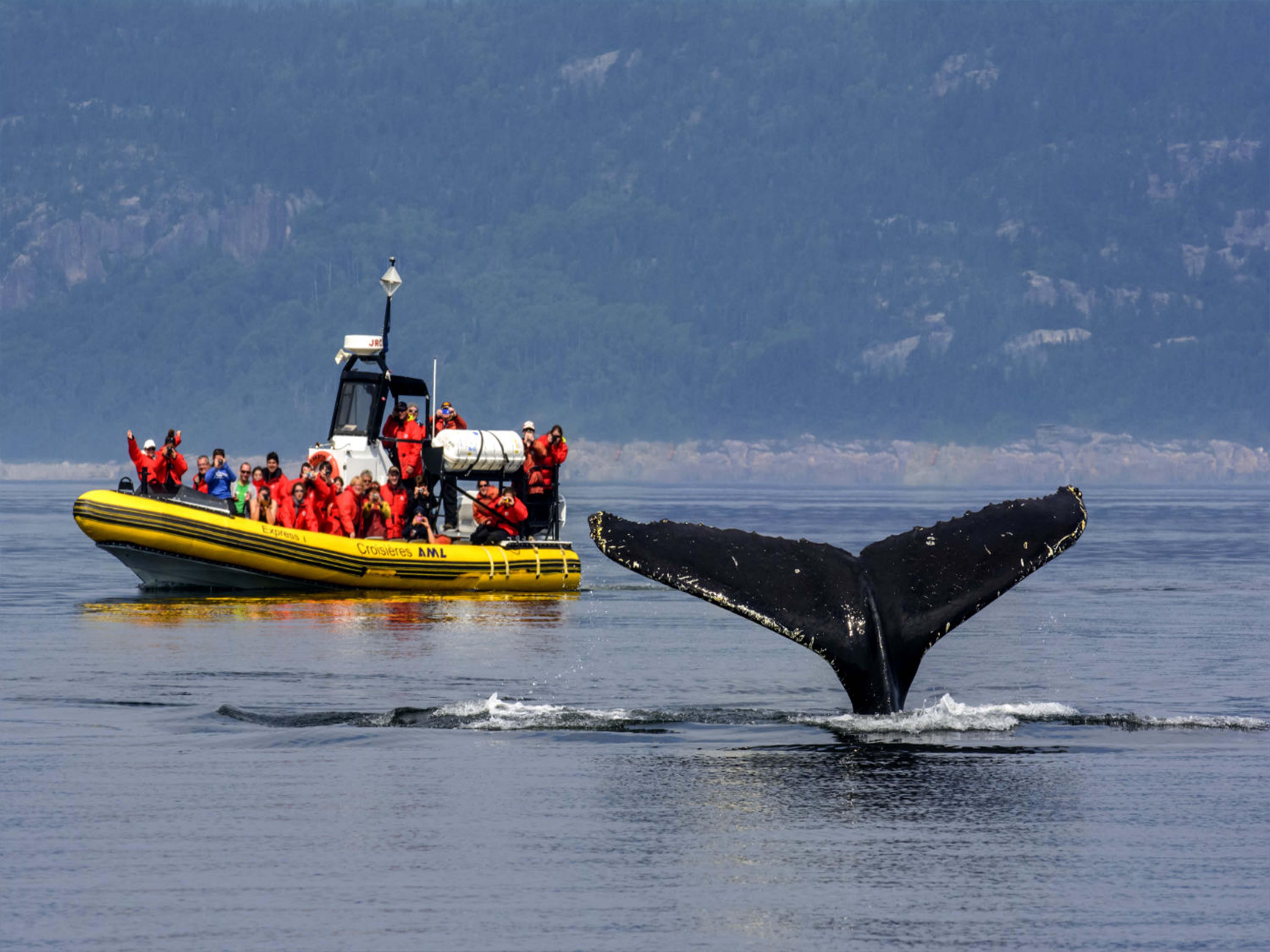 http://www.capauleste.com/wp-content/uploads/2016/02/Croisiere-baleines.jpg