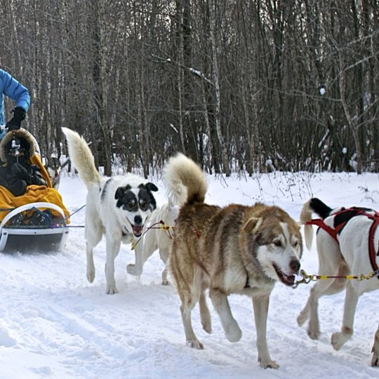 http://www.capauleste.com/wp-content/uploads/2016/08/Departs-chiens-540x540.jpg